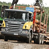 Camioane Forestiere Transport Busteni
